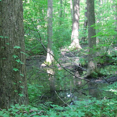 South Swamp at Backus Woods