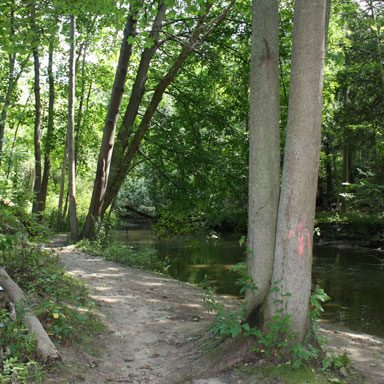 Along the river trail