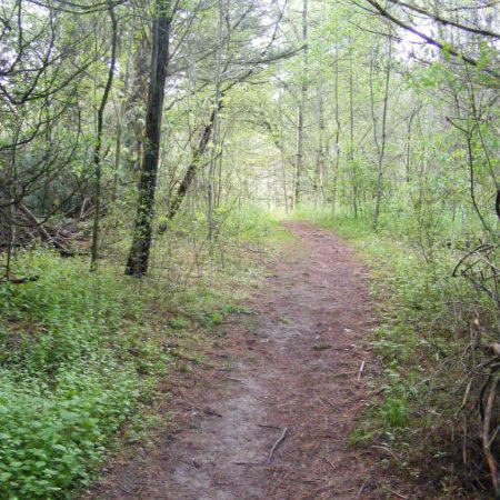 forest trail with dirt path