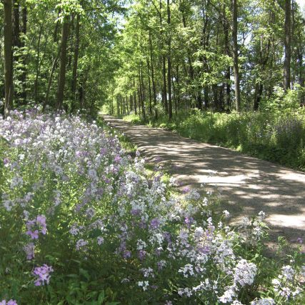 Trail and roadside flowers in bloom