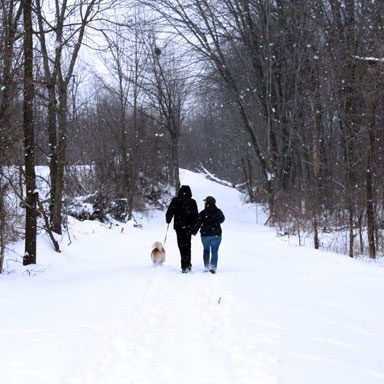 Couple walking dog in winter